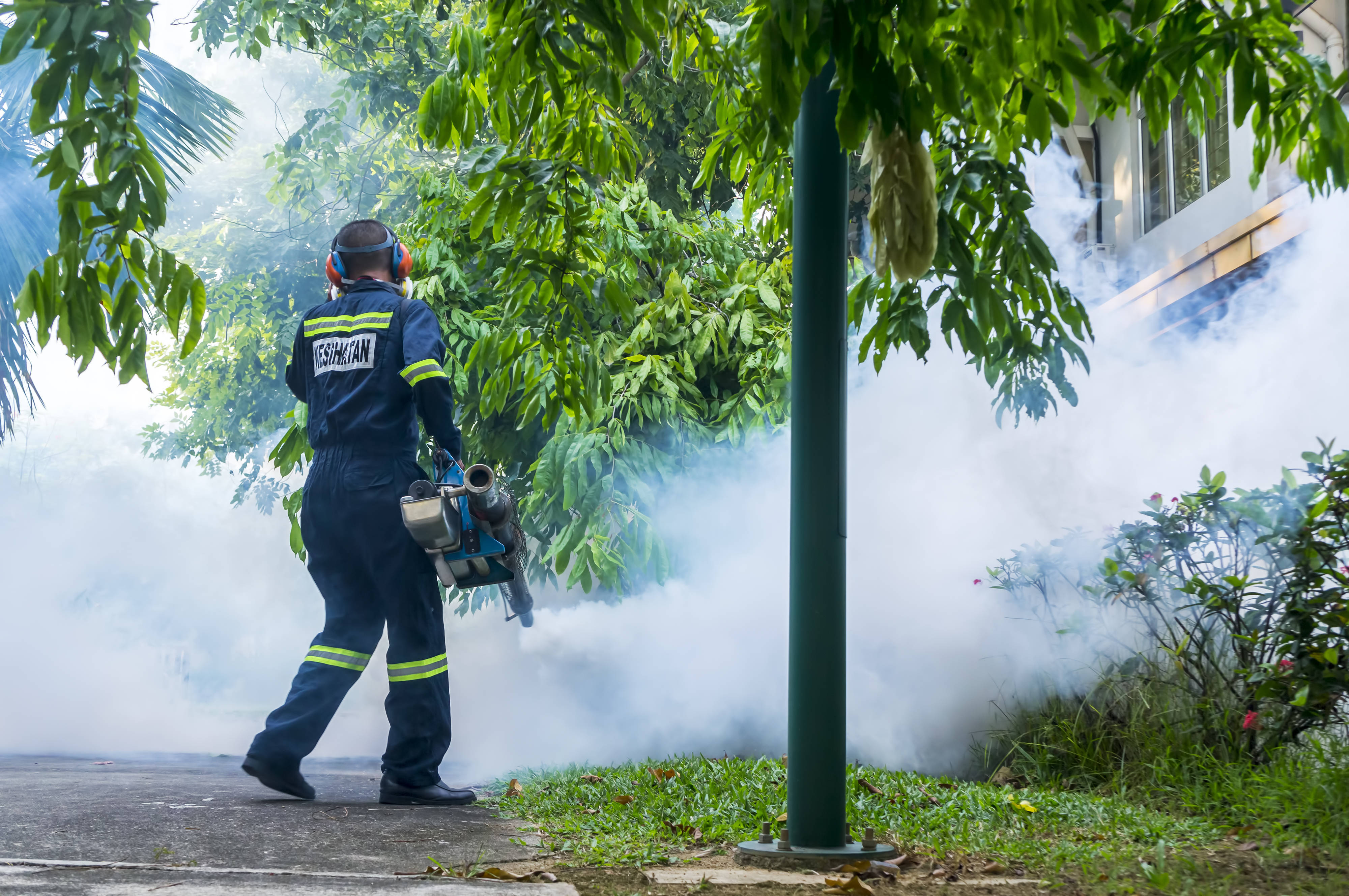 Plagas urbanas, un peligro para todos