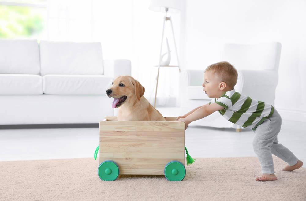 Estimula su inteligencia emocional con una mascota